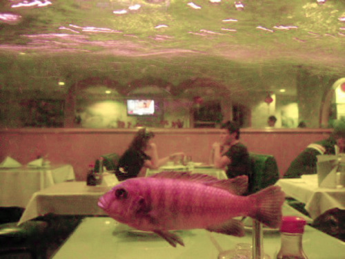 "punkzoo:  ""Young Human Couple As Seen Through A Fish Tank At  A Chinese Restaurant"" by Valerie Van Gelder"