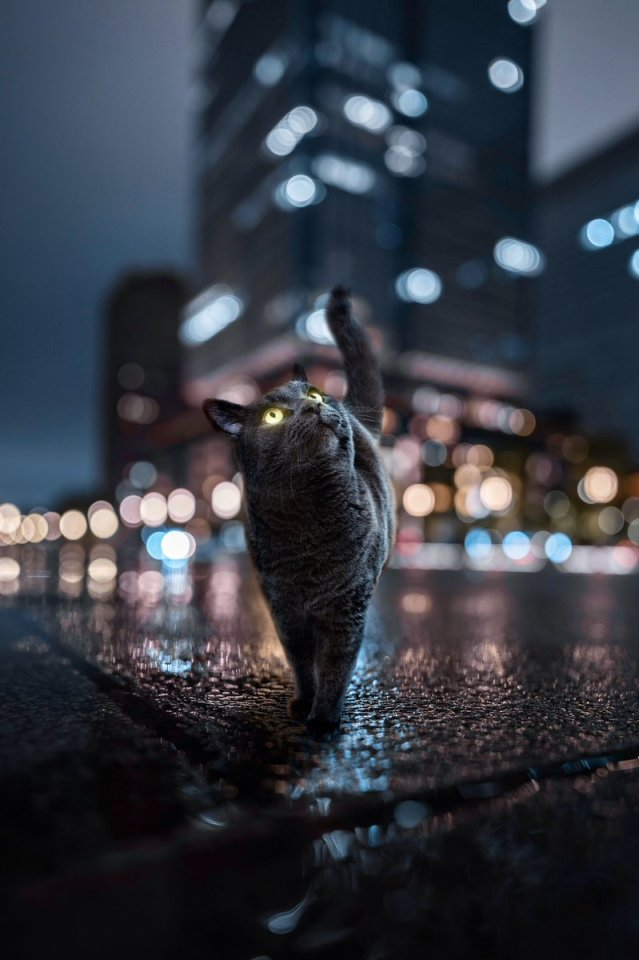 The cat in the city Follow for more cute posts! #cute#aww#love#animals#adorables#so cute