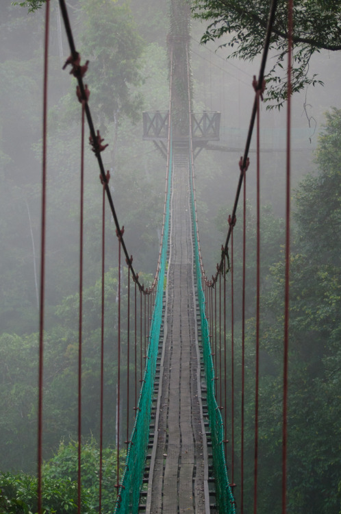 travelingcolors:  Canopy Walk, Danum Valley | Malaysia (by Michael Cook)