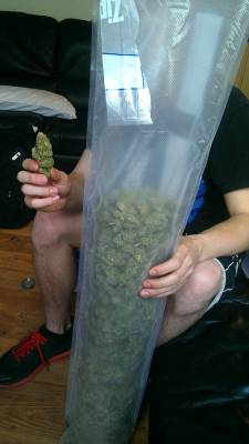 transformgkc:  ironlungs:  your-pot-blog:  Just picked up a lb of some pineapple express, oh how I love California  weed  beautiful  By God