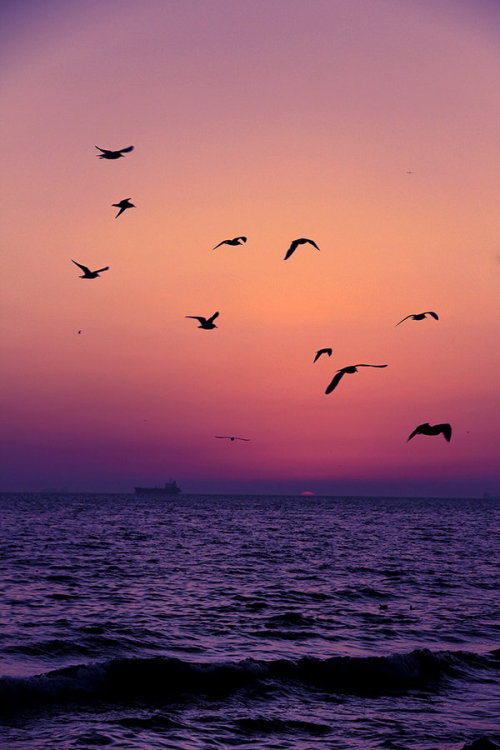 x-enial:  Birds by MustafaSEZER