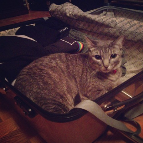 Lucifer is helping me pack for my trip. I think he wants to come. - New York May 2013