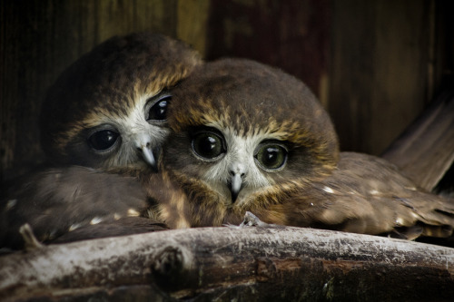 earthlynation:  Love Birds by Ross Van der Watt
