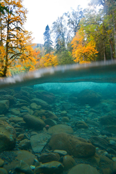 senerii:  Split Underwater and Above Water View of the North Fork Skokomish River by Lee Rentz on Flickr.