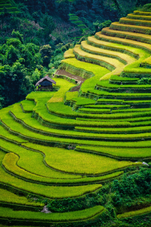 diterra:  Rice terrace fields (by [ 117 Imagery ])  simple, yet so so beautiful