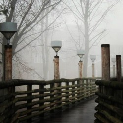 Fog blanketed our Mount Carmel Campus today. (Photo by Kyle Gravitte '13.) (at Quinnipiac University)