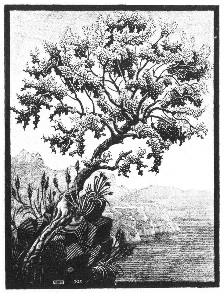 M. C. EscherCarubba tree, [Ravello]February 1932 Woodcut in black and grey, printed from two blocks