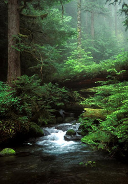 egosumlibertatem:  Ennis Creek waterfall, Olympic National Park, Washington by augen on Flickr.
