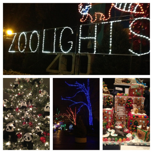National Zoo Zoolights adventure!