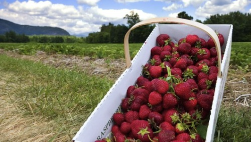New Hampshire considering a farm-to-plate bill     The initiative's sponsors are looking at Vermont's local food program as a model.