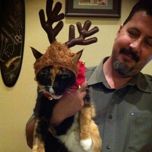 Haha forgot bout this pic #cat #christmas #reindeer #pissedcat