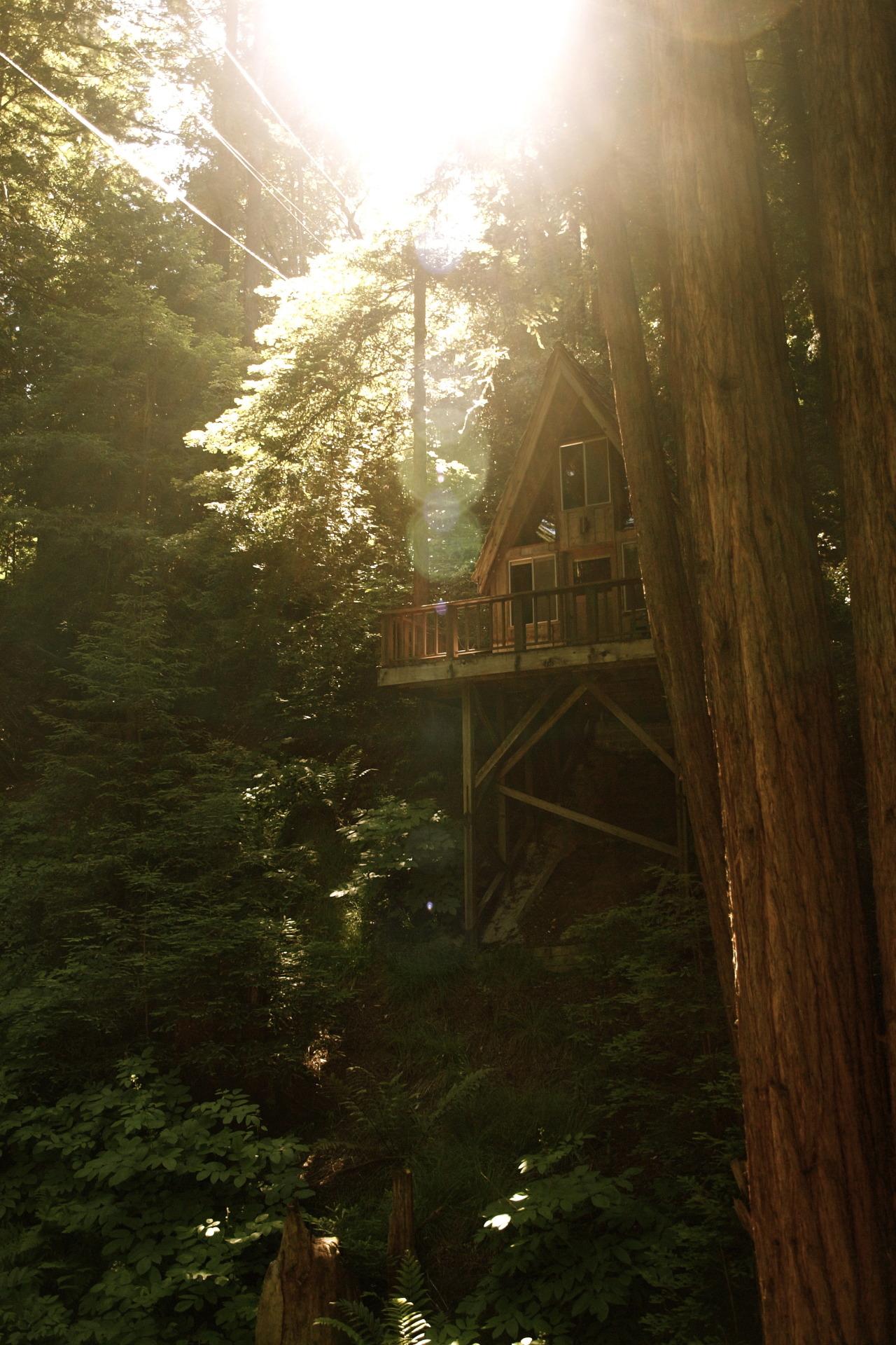 Sequoia Retreat Centerby (scissorina) | Website