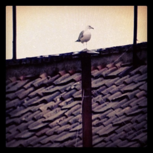 Bird on the Papal Smoke Stack…could this be a sign for the next vote?