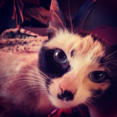sammygetyourgun:  Mo  My kitty is just the cutest :3