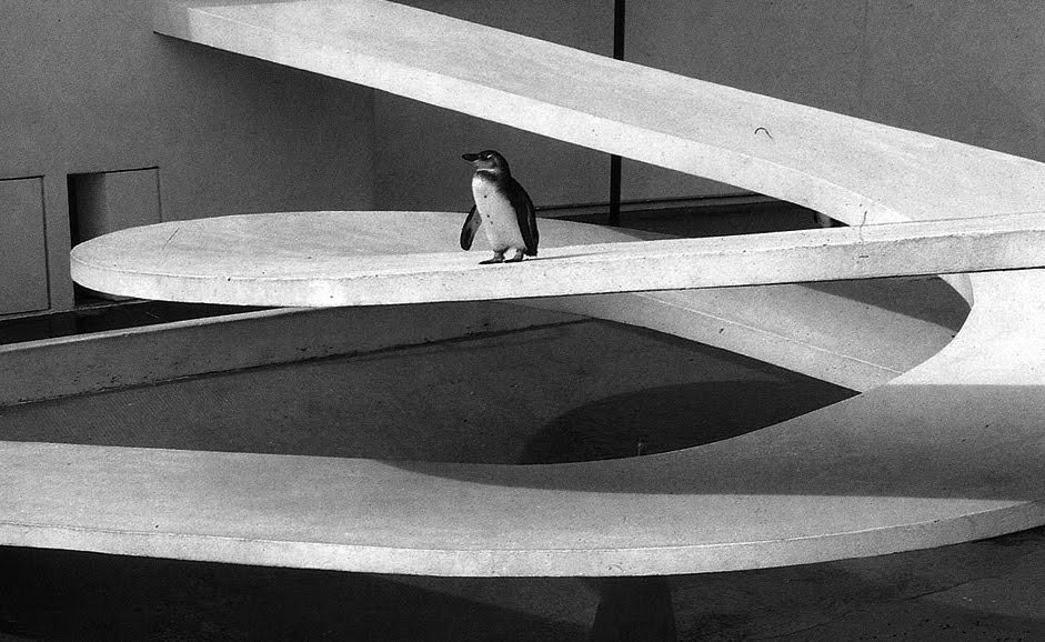theimportanceofbeingmodernist:  Too Cool For School: London Zoo Penguin Pool by Berthold Lubetkin-  Happy world penguin day everybody! In celebration, today's post features three of my favourite things: Modernism, monochrome and penguins! Russian architect Berthold Lubetkin, who emigrated to England in the 1930s, was probably most famous for Highpoint, a block of flats in North London. He was a pioneer of the modern movement in Britain and worked on many projects. He designed the penguin pool at London zoo in 1934 which housed the penguins until recently. The  pool is still at London Zoo today and is now grade 1 listed but unfortunately the penguins have been moved to another enclosure.  TWITTER | FACEBOOK  www.theimportanceofbeingmodernist.com