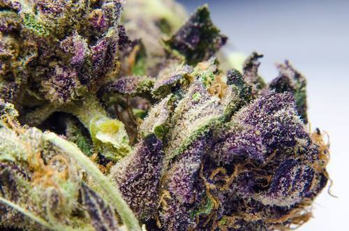 spaceandweed:  Purple Madness