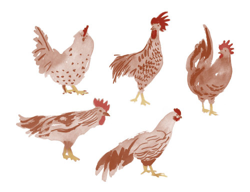 Leah Reena Goren, Hens & roosters… leahreena:  ….and more birds