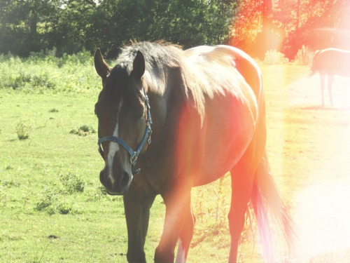 optimistic-cowgirl:  One more edit of my baby, old photo of him from the summer when he was gorgeous