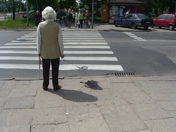 Invisible dogs of Poland.