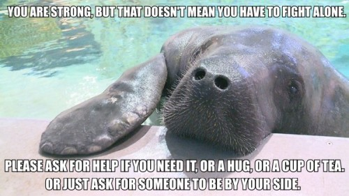 "calmingmanatee:  [Image description: A photograph of a manatee, taken above water. The manatee is resting their grey head on the edge of a pool, with one flipper up as well. TEXT: ""You are strong, but that doesn't mean you have to fight alone. Please ask for help if you need it, or a hug, or a cup of tea. Or just ask for someone to be by your side.""] [Photo credit. Read this, it's great.] I think a lot of people think that to be strong, you have to be completely independent and never show weakness and fight all of your battles by yourself. And that's not true. Even the strongest people have others to lean on. Friends to hug, parents to make them dinner, and acquaintances to wish them a good day.It's okay to ask for help, or to ask someone to give you a big hug because you feel so much weight on your shoulders you need someone to share the load. That's all okay. You are important, and loved."