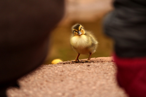 This little chick caught me taking a pic of them :)