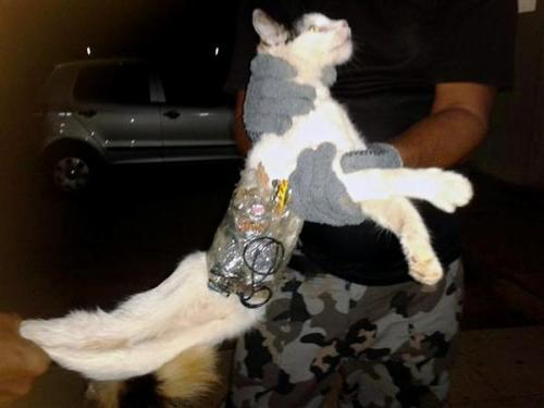 Cat caught smuggling contraband into Brazil prison (Photo: Penitentiary System Of Alagoas / AFP - Getty Images) A cat was caught entering a Brazilian prison with two small saws, drills for concrete, a cell phone, a cell phone charger, batteries and a headset wrapped around its torso. Authorities say the feline isn't talking. Read the complete story.