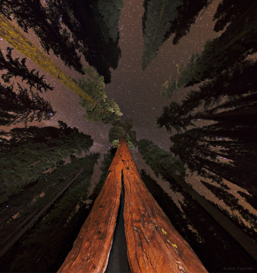 Sequoias and the Stars