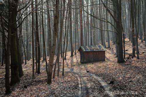 Forest / Shack / Cabin on Flickr.Forest / Shack / Cabin