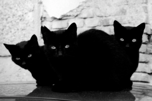 antiso-cial:  Black Cats