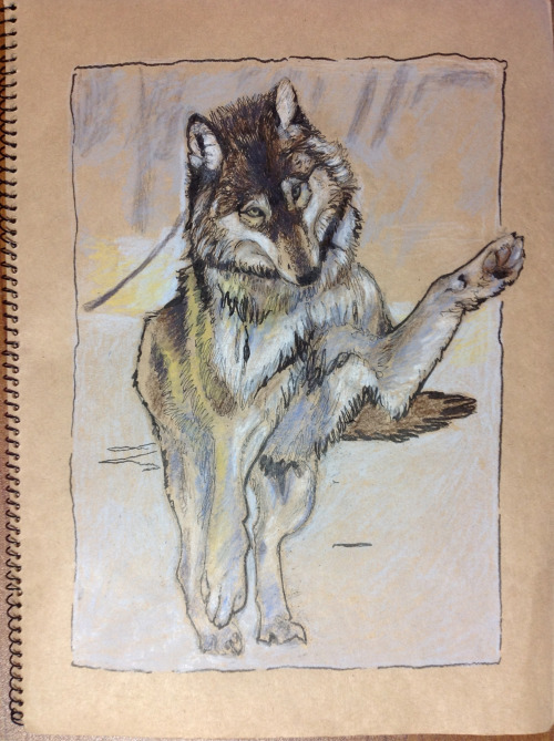 Awoooooooo I have drawn so many wolves in my life but not so many since middle school. Photo reffed, more dicking around with cheap brown paper from the 100 yen store.