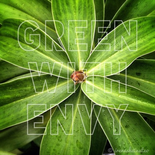 Green with envy. #green #typography #plant