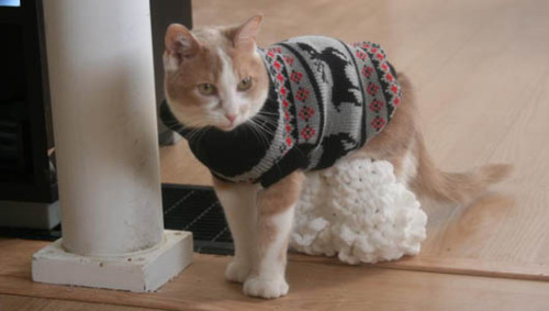 mothernaturenetwork:  Custom leggings help disabled cat walk Born with backwards hind legs, Willow had trouble getting around until she donned the first 'Leggings for Life.'