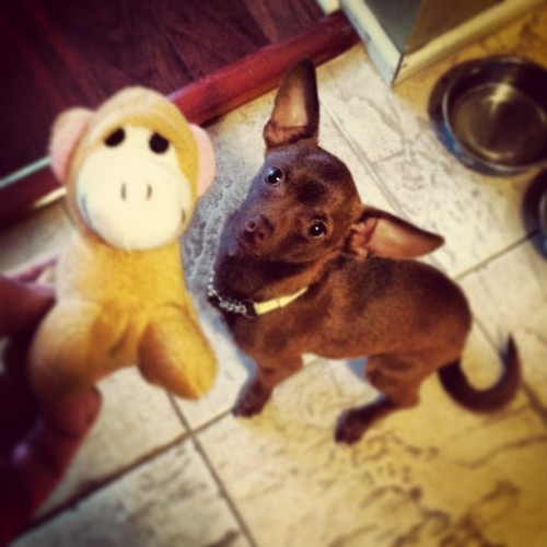 Who wants to play with the monkey?