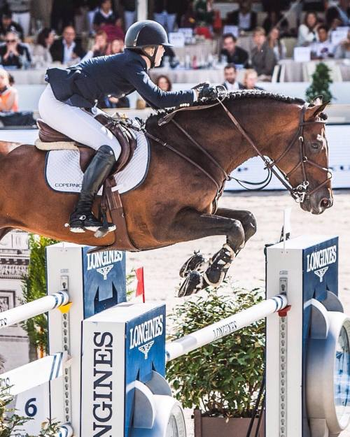 horse eiffel equine sporthorse paris global showjumpinghorse tour jumping longines champions equestrian