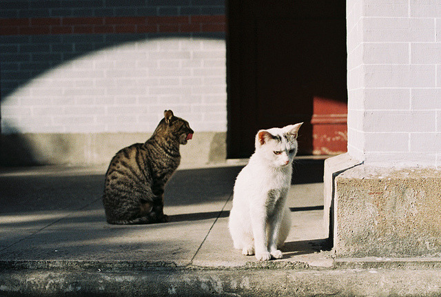n0rthwind:  101204 (11) by 【miao】 on Flickr.