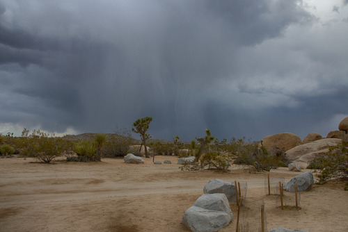 Joshua Tree on Flickr.