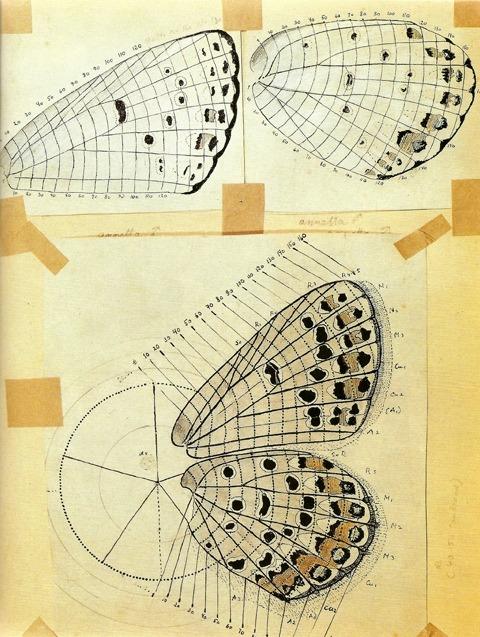 Los dibujos de Nabokov