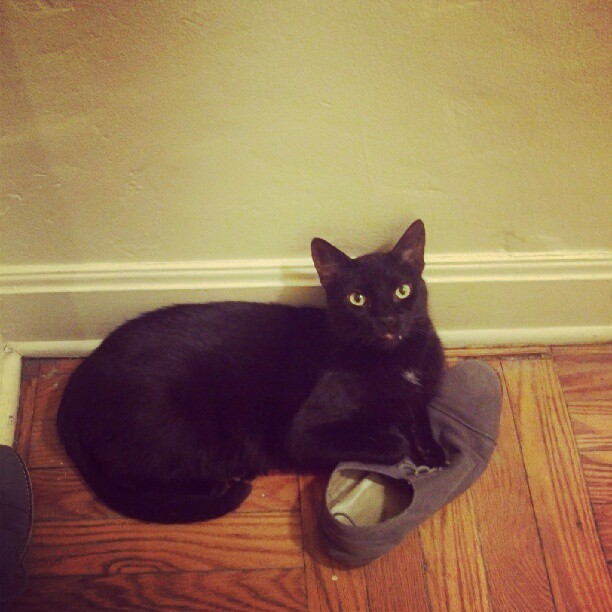 Band cat keeping the shoes warm.