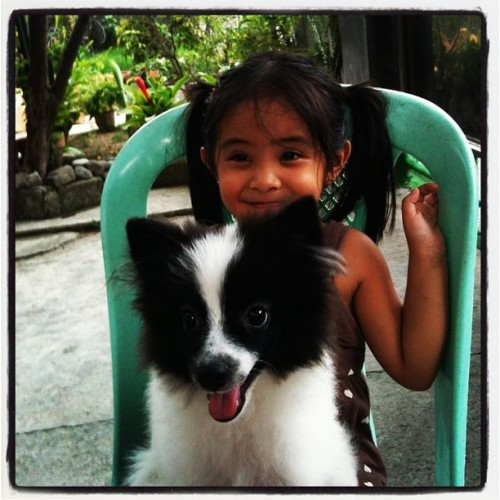 Cute baby Sammy and baby Pompoms…#playmates #pompoms 🐼🐶😄