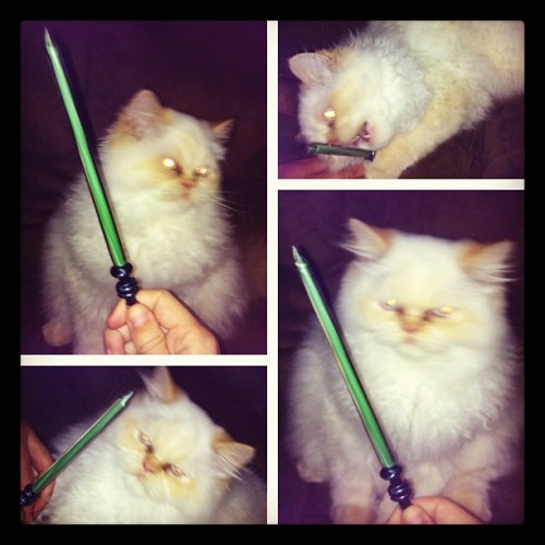 Getting Luke to pose with a light saber dabber proved to be difficult. But still adorable.