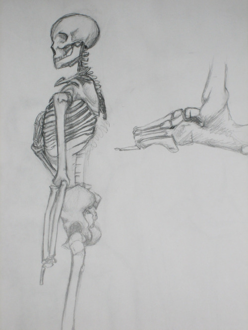 Skeleton study,  graphite on paper, by Ravenseyes