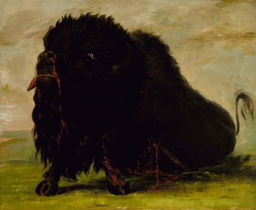 cavetocanvas:  George Catlin, Dying Buffalo, Shot with an Arrow, 1832-33