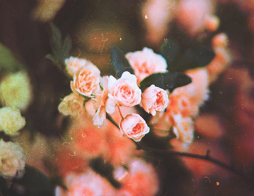 itsucksbutitsmylife:  beautiful | Tumblr on We Heart It. http://weheartit.com/entry/60840485
