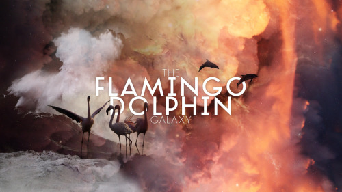 Flamingo Dolphin Galaxy