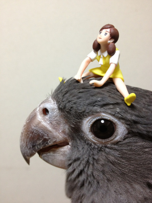 "vani-lla:  黒哥@greater vasa parrot has put a ""fuchiko""  i cant get over this blog"