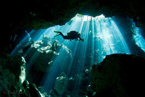 thelovelyseas:  Cenotes by Todd Aki on Flickr.