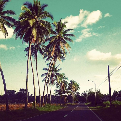 Of roadtrips and palm trees.