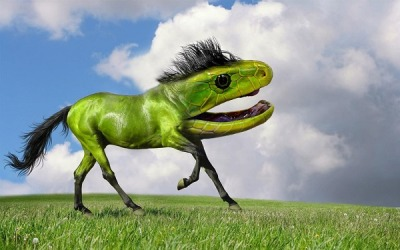 New Species Of Animals Created Through Photoshop