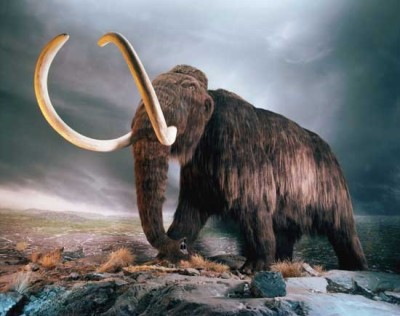 therumpus:   The mammoth became kind of the first bald eagle, the first species people really identified with America because it was so big and powerful. It was everything that a new country wanted to see itself as. And it hit people hard when more and more evidence started emerging that mammoths were, in fact, extinct. They had to change the mammoth story and rewrite their feelings about it. The new story went that instead of America being so magnificent that it was filled with mammoths, it was actually an empty place just waiting for white settlers to take it over. God had wiped the mammoth out to clear the way for us. It's another example of the narratives we build around creatures.  The Rumpus Interview With Jon Mooallem  read this article. it is not concise. but it is imperative.