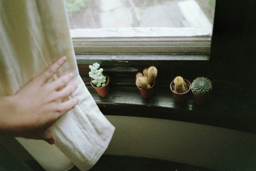 palides:  untitled by emily burtner on Flickr.